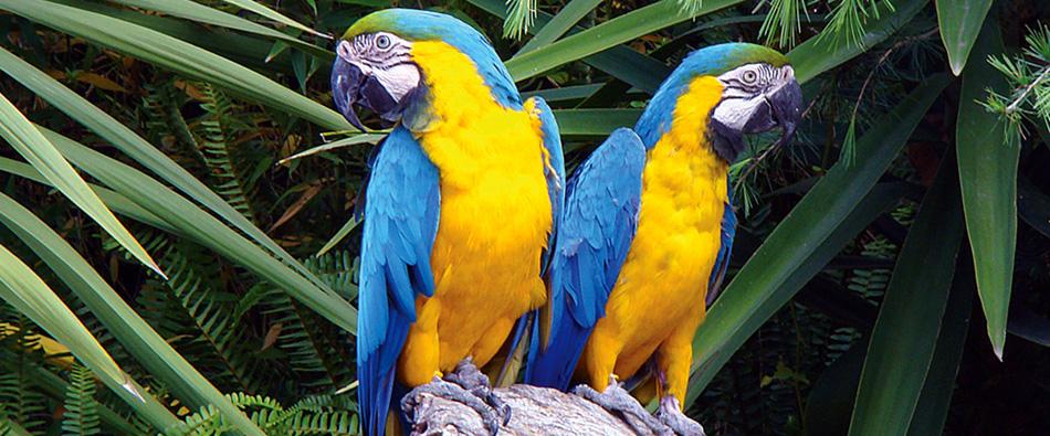 Excepcional Arara-azul-e-amarela - Jardim Zoológico DU28