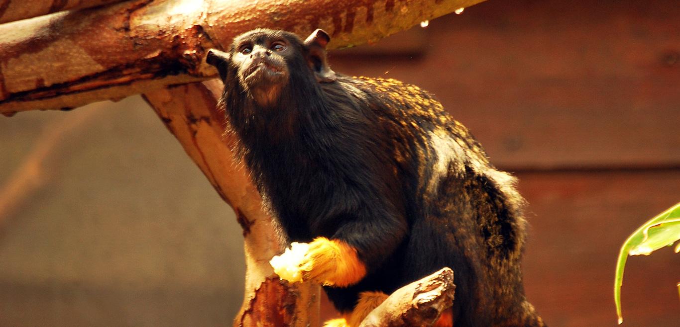 Zoo Imagem
